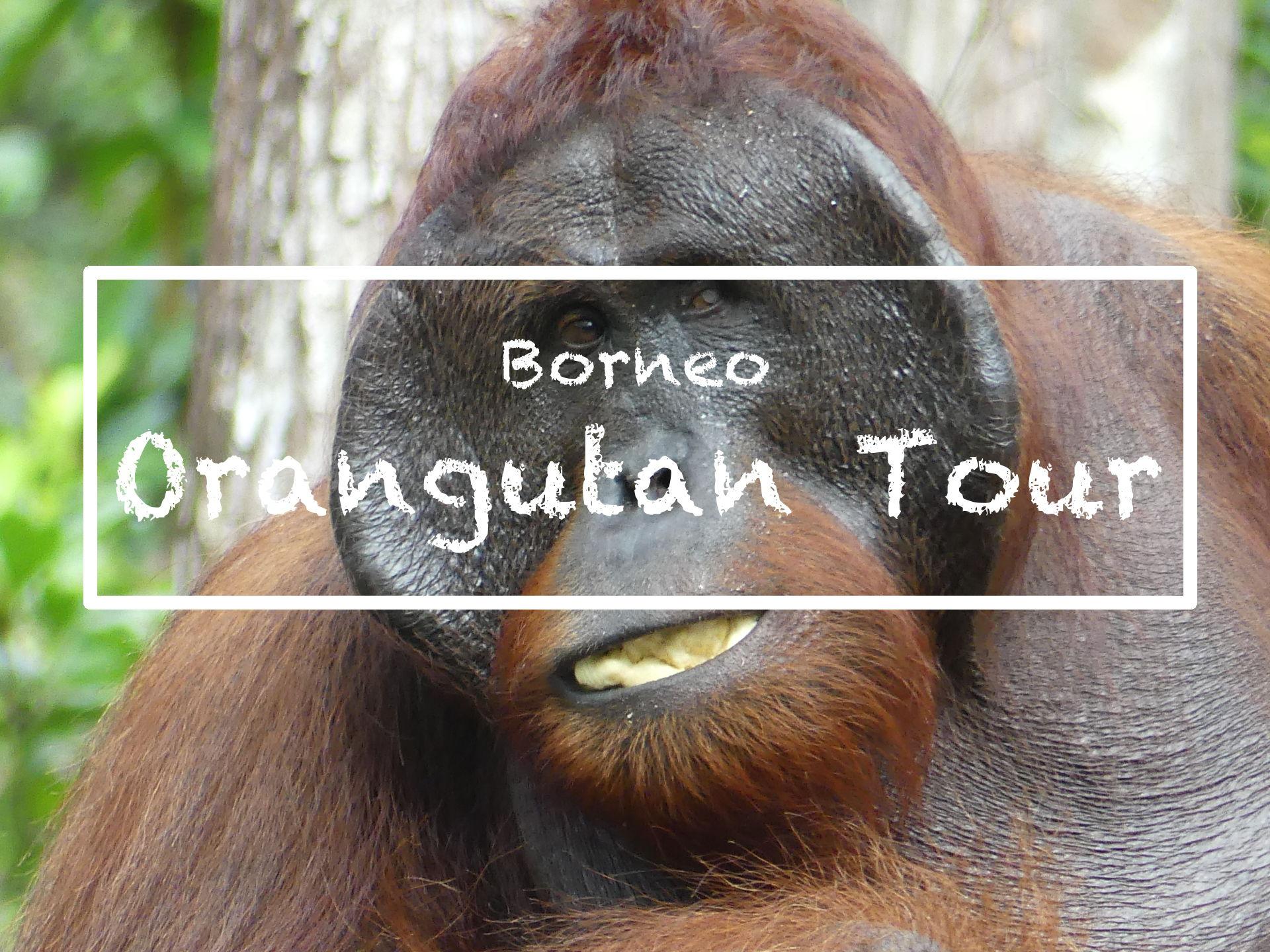 Orangutan Tour in Borneo