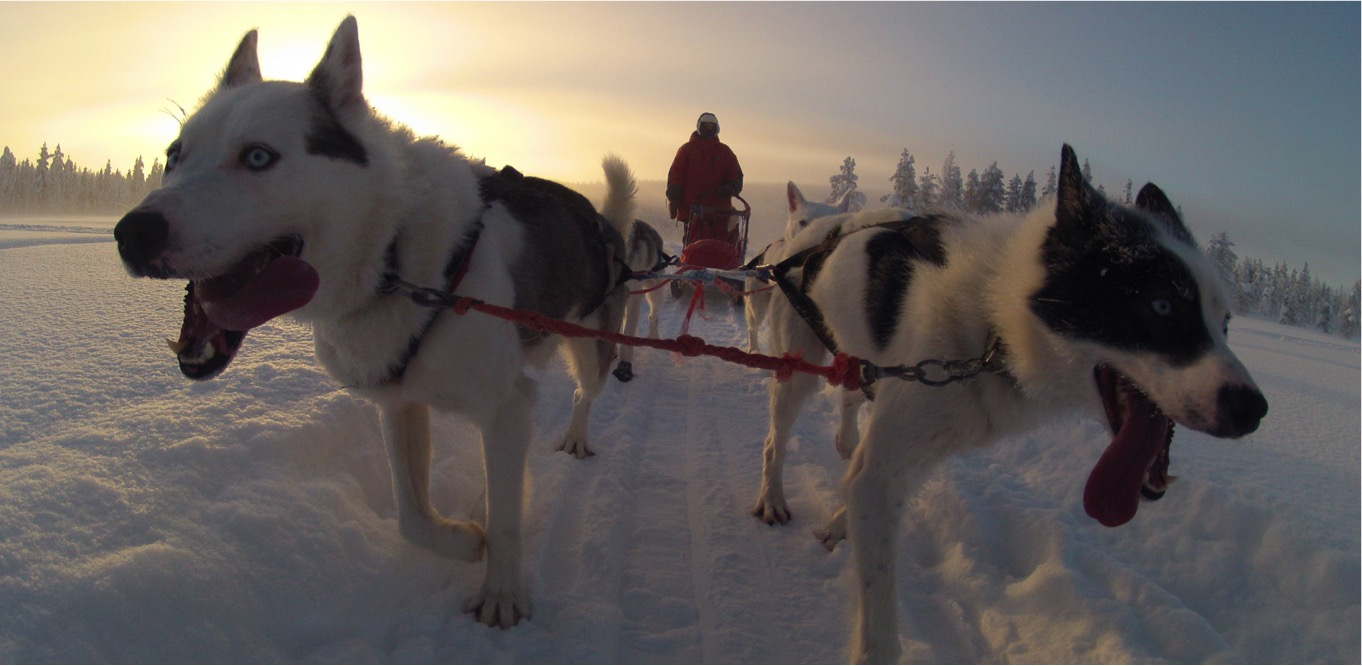 Husky Tour in Lapland